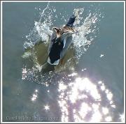 4th Jun 2012 - Splash Down!