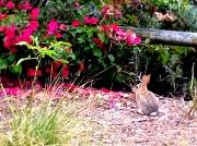 4th Jun 2012 - Spring Bunny