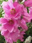 5th Jun 2012 - Mallow