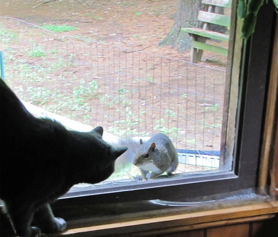 Peeping squirrel. by maggie2
