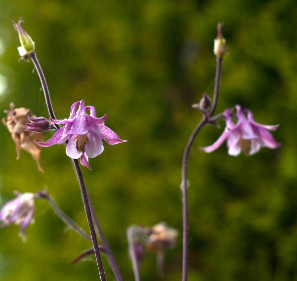 More flowers by manek43509