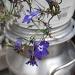 Purple Flowers by julie