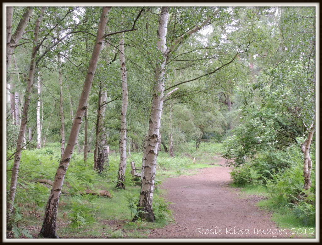 Along the Path by rosiekind