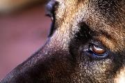27th Jun 2010 - doggie