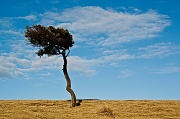 11th Jun 2012 - Lonesome - one tree hill