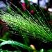 Just a tuft of wet barley grass... by filsie65
