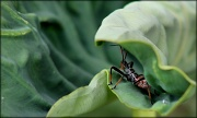 11th Jun 2012 - Hidden predator