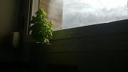 12th Jun 2012 - Grow to the light