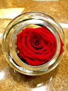 12th Jun 2012 - Rose Bowl