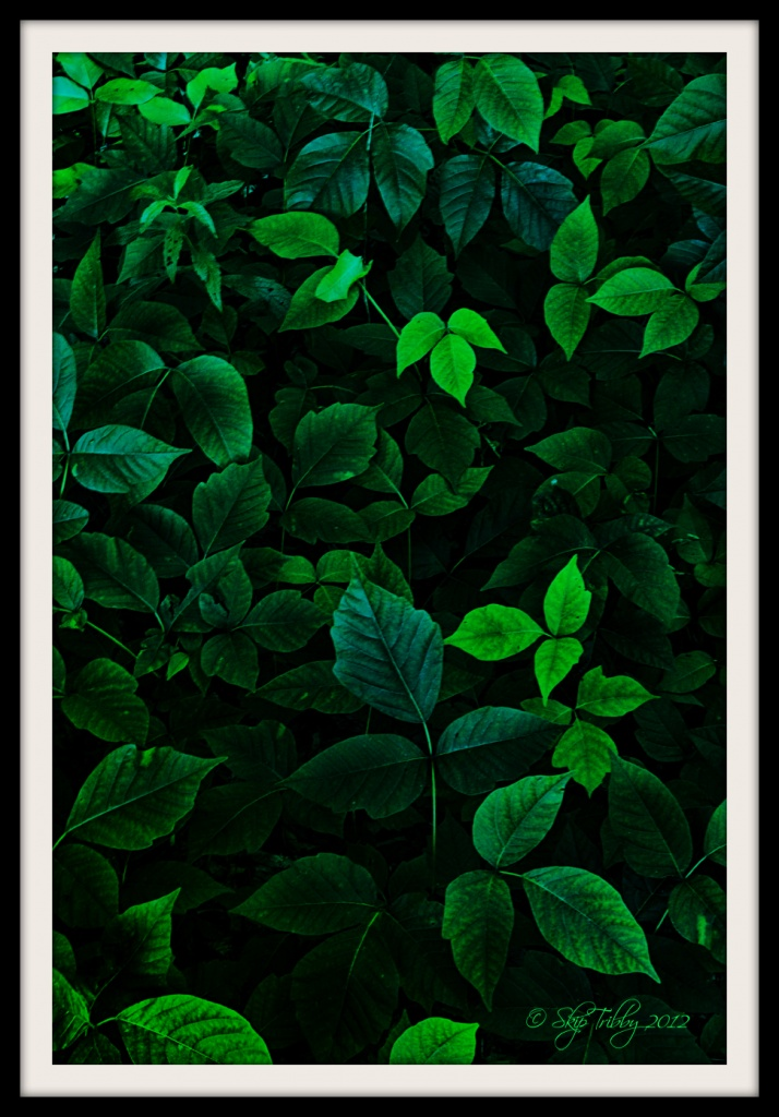 Leaves of Three. . . Let It Be by skipt07