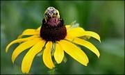 15th Jun 2012 - Say pollen!