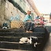 Coconut shell seller by peterdegraaff