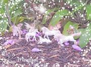 16th Jun 2012 - Magical