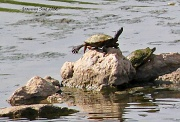 16th Jun 2012 - Turtle stretching