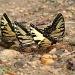 4 Butterflies by tara11