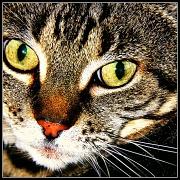 19th Jun 2012 - Katie Cat