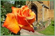 20th Jun 2012 - The Garden Churchyard of St.Peter and St.Paul,Abington Park,Northampton