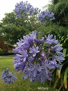 21st Jun 2012 - Pretty in Purple