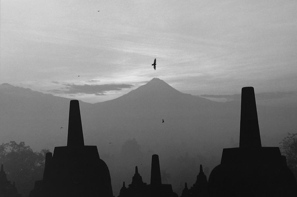 Birds of Dawn by peterdegraaff