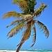 Coconut Palm  by soboy5