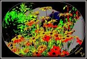 21st Jun 2012 - Flower Garden