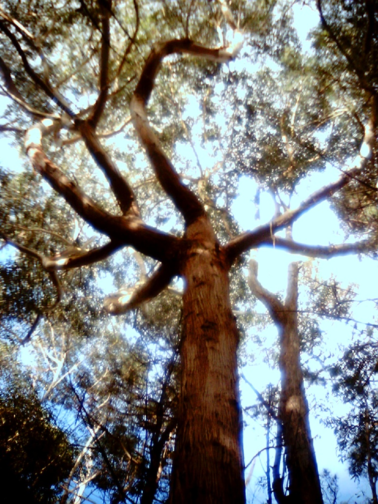 the half way tree - best tree in the forest  by spanner