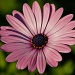 Pink and green by abhijit
