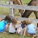 Little Ones and Horses by julie