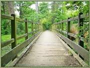 26th Jun 2012 - Rustic Footbridge