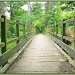 Rustic Footbridge by carolmw