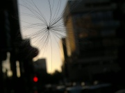 25th Jun 2012 - Fly