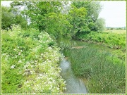 27th Jun 2012 - River Nene at Kislingbury