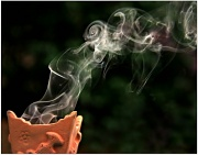 25th Jun 2012 - Frankincense