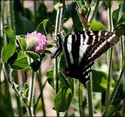 28th Jun 2012 - The Butterfly Fairy