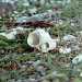 Broken shell by peterdegraaff