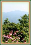 27th Jun 2012 - Scenic Beauty