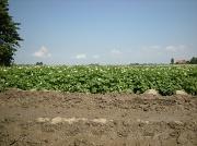 30th Jun 2012 - Soil ... clay