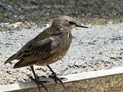 2nd Jul 2012 - Pretty bird.