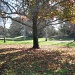 Mile Square Park_A fall tree on a January day in California by Weezilou