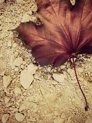 1st Jul 2012 - Maple Leaf