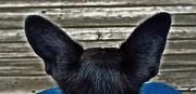 1st Jul 2012 - I'm all ears