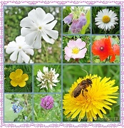 3rd Jul 2012 - Wildflowers of Summer
