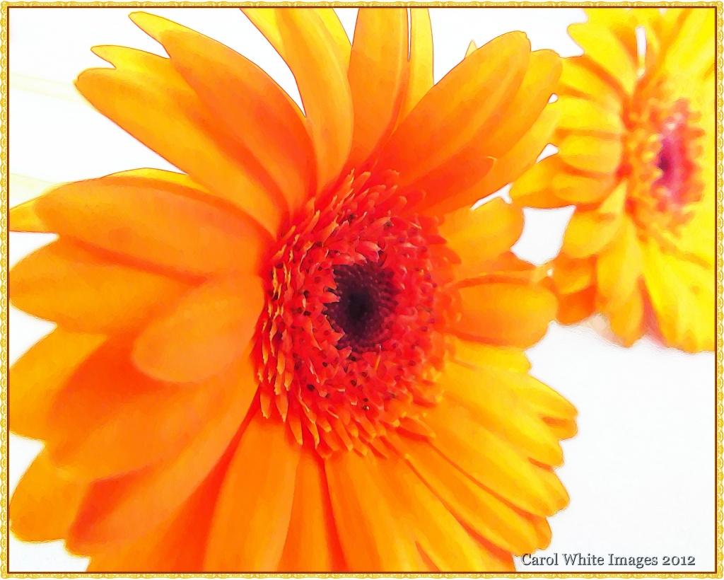 Orange Glow by carolmw