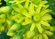 4th Jul 2012 - Yellow Flowers