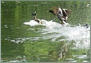 5th Jul 2012 - Splash Down