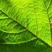 Leaf Green by filsie65