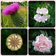 6th Jul 2012 - Collage of flowers