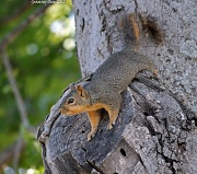 5th Jul 2012 - Just a little Squirrely