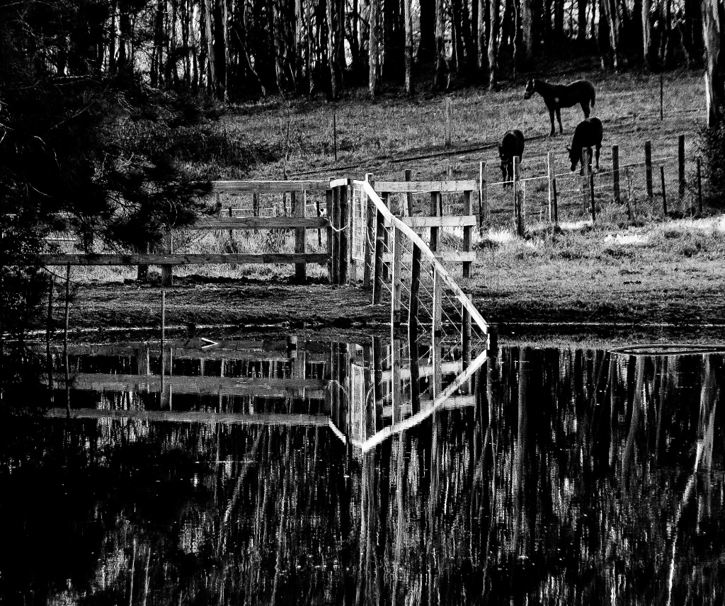 Fenced in by abhijit
