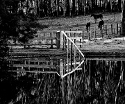 8th Jul 2012 - Fenced in